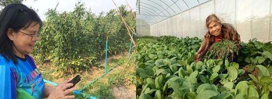 Smart Farm2.jpg